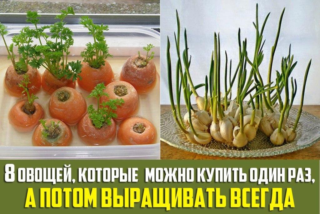 Многоразовые растения