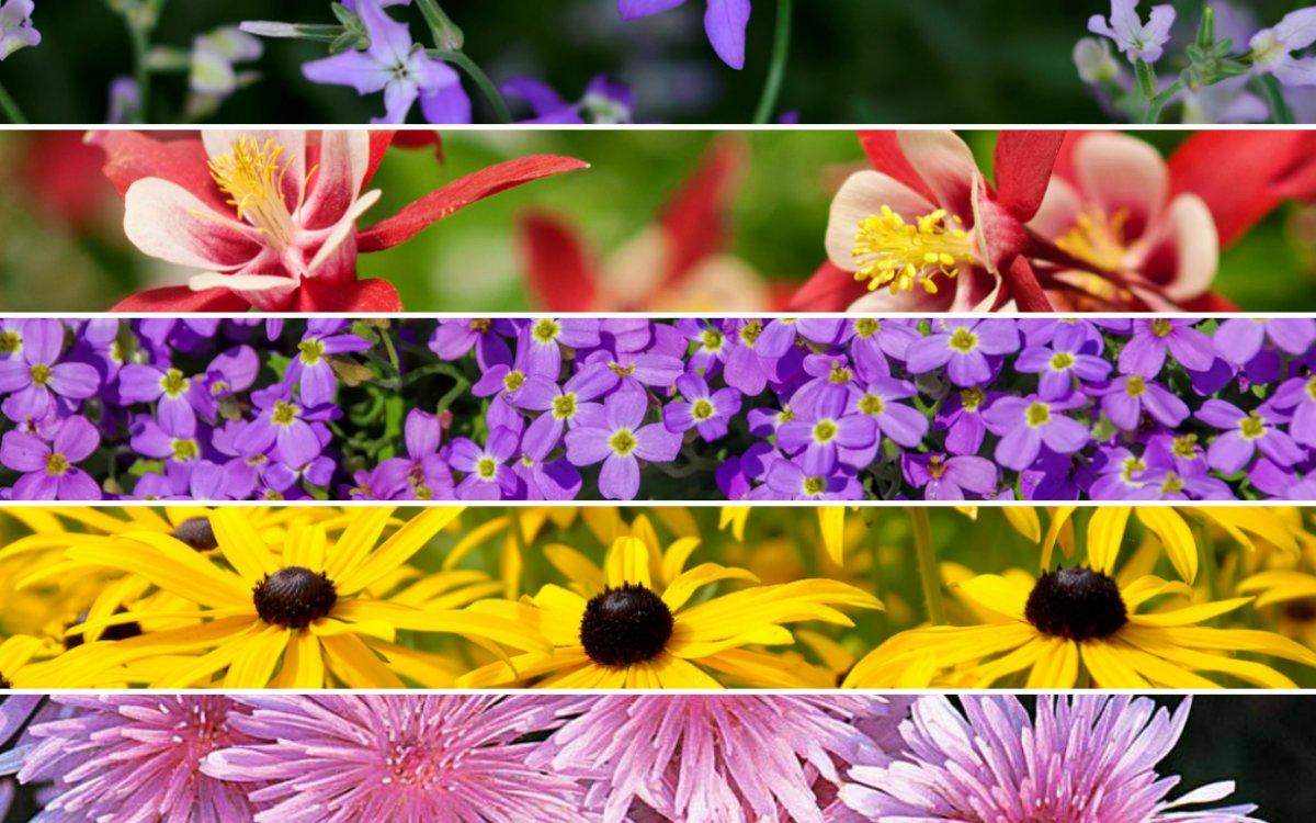 неприхотливые многолетние и однолетние растения