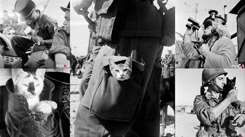 Кошки в войне