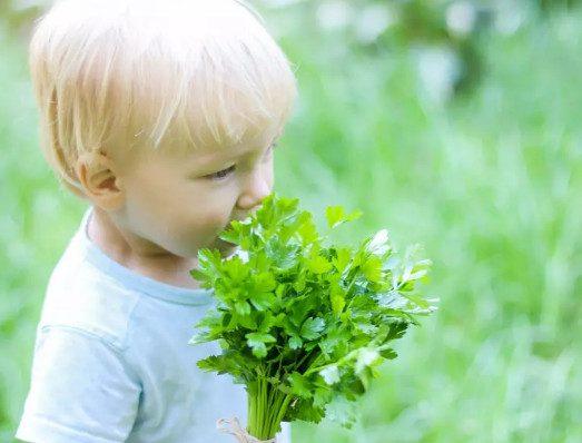 Какую зелень можно давать ребенку?