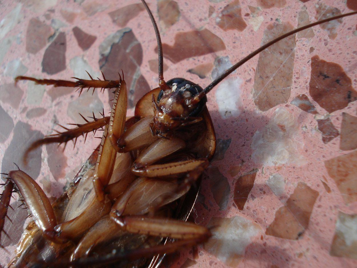 «Простите, ноуменя всупе таракан!»