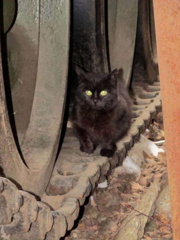 Под защитой бронетехника, животные, коты