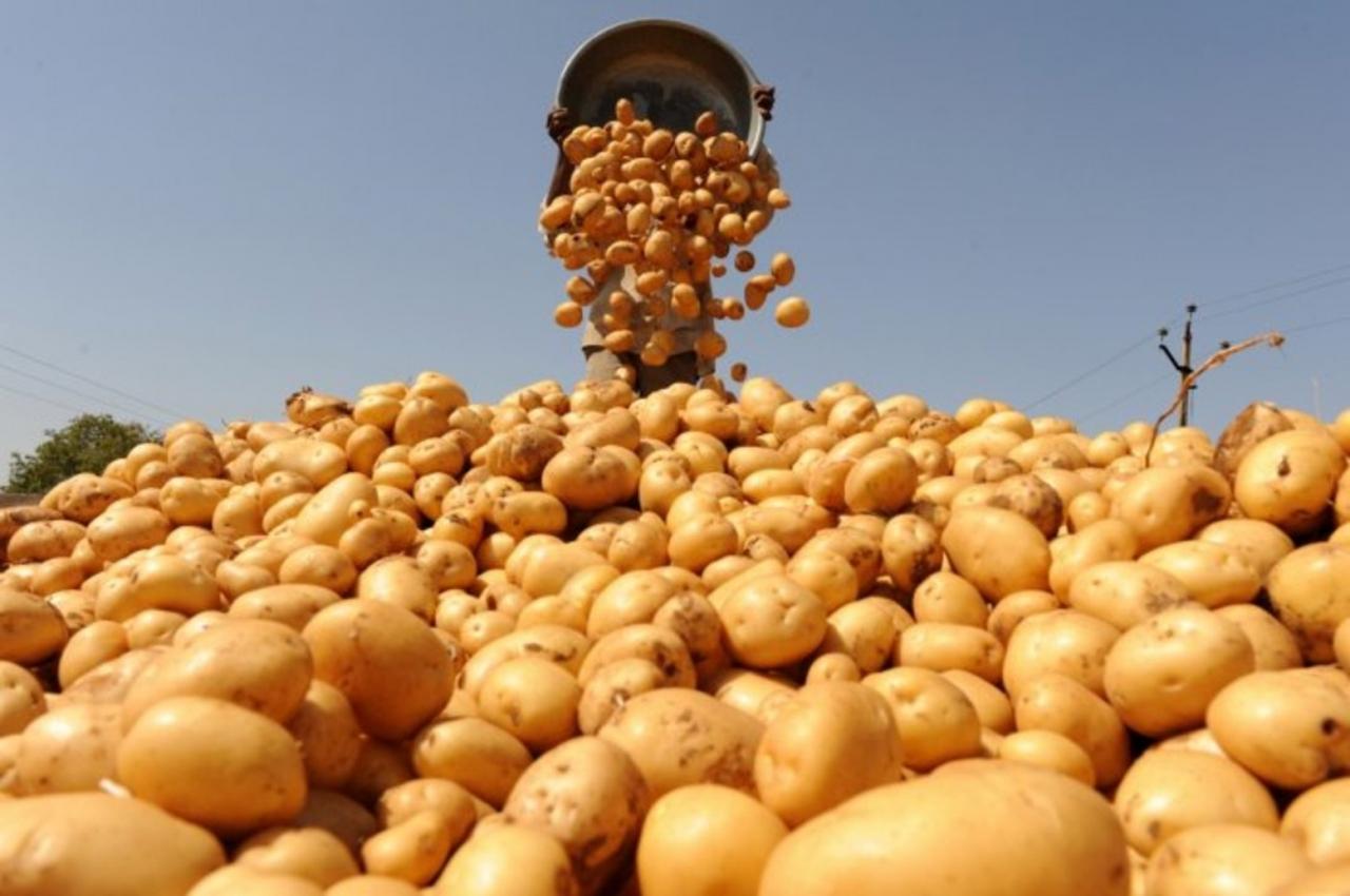 Чью картошку едят граждане России?