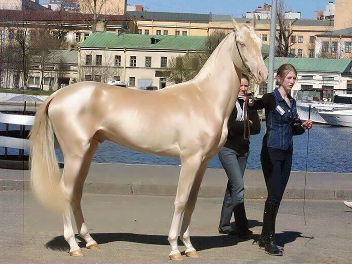 "People Are Calling This Super Rare Creature The ""World's Most Beautiful Horse"""
