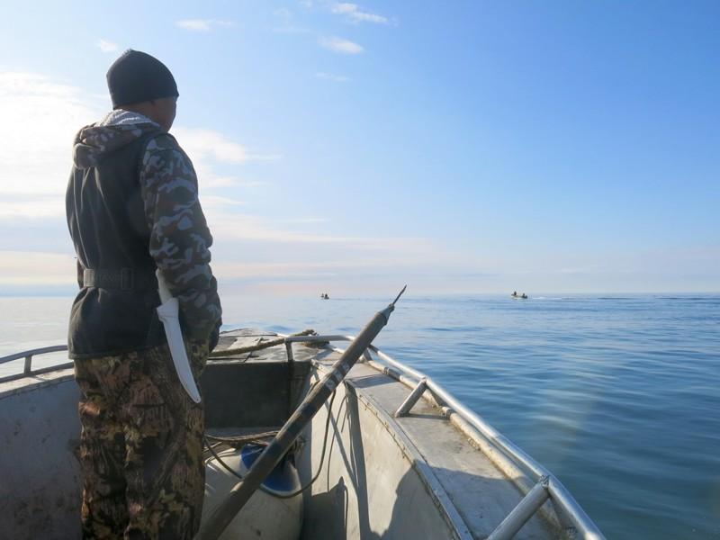 Единственное место в России, где охотятся на китов- это Чукотка Города России, анадырь, россия, чукотка