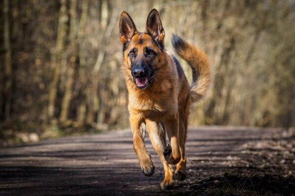 Как пес заменил взрослого члена семьи