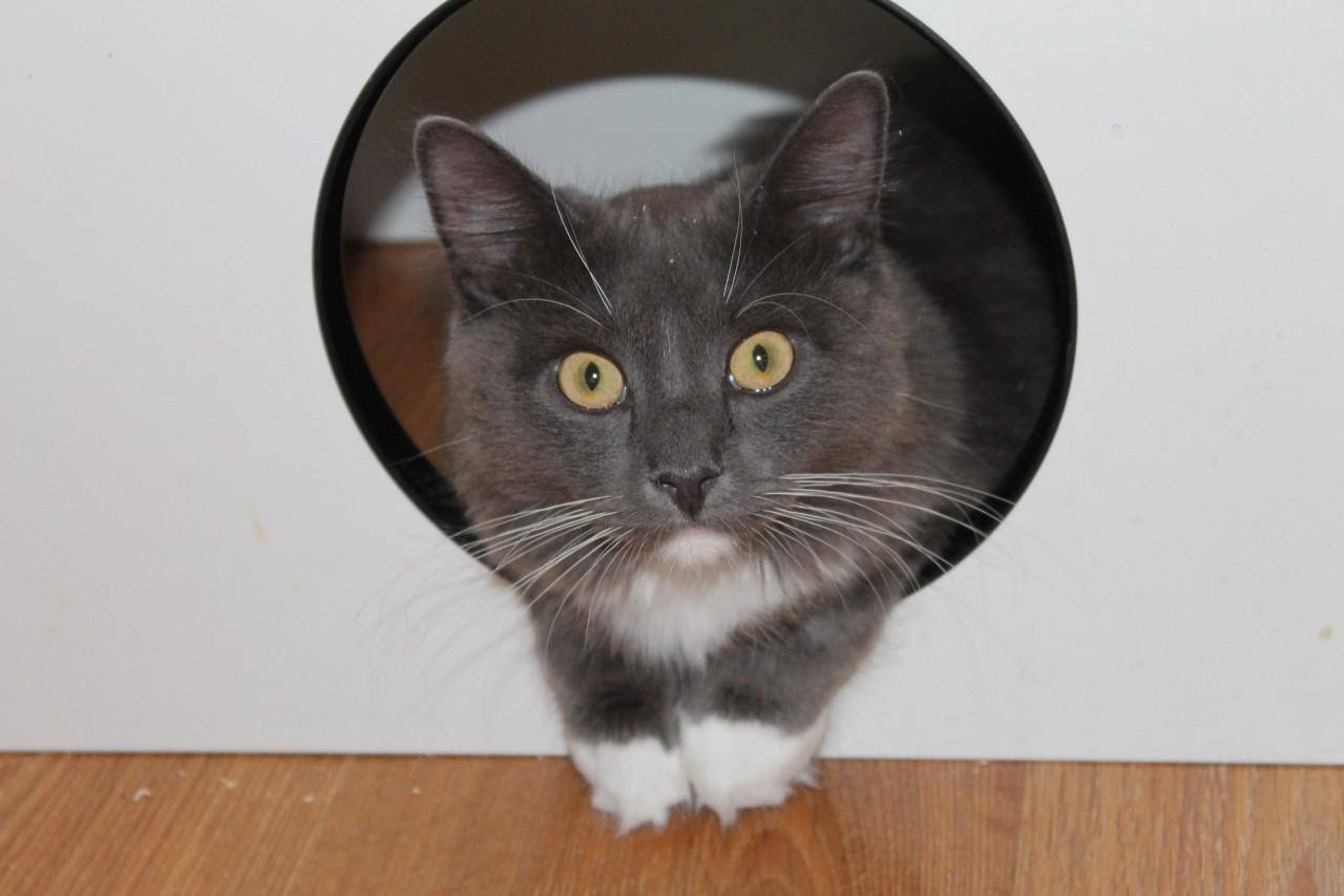 Дома котик