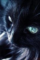 Кошки и Котята 80