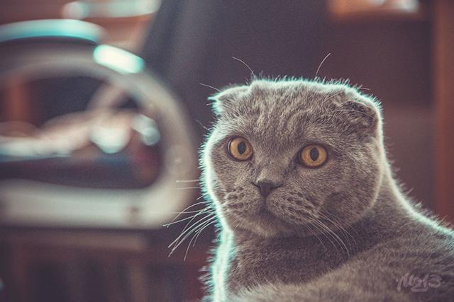 Аналогия хворей и радостей котов и людей