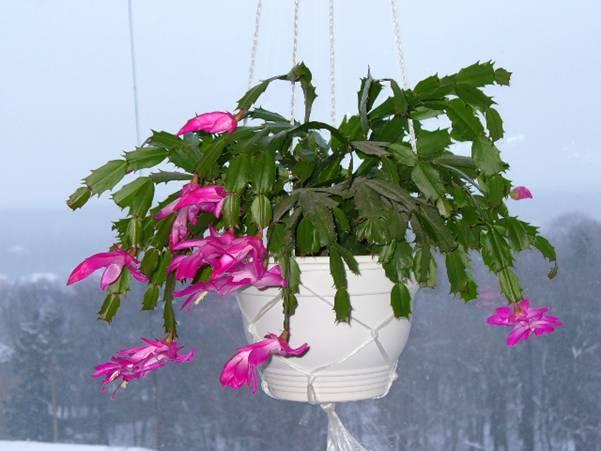 Как правильно подготовить комнатные растения к зиме