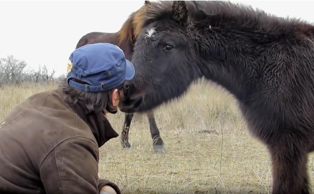 Мужчина освободил лошадь от цепей. Взгляните, как животное отблагодарила своего спасителя!