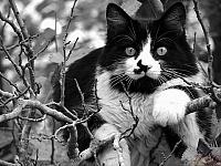 Кошки и Котята 67