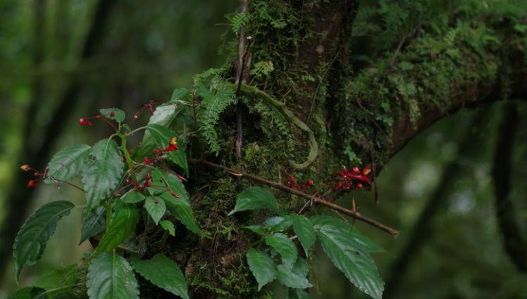 Необычный цветок крутится ради опыления птицей