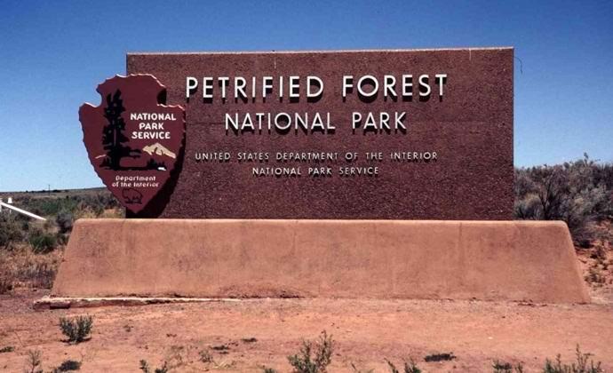 Окаменелый лес в США