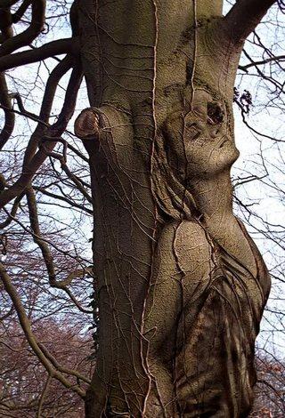Когда деревья снова обнажатся...