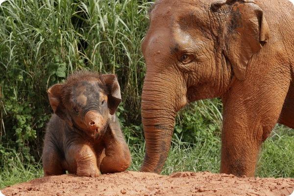 Маленький слоненок по имени Любовь