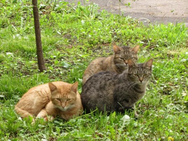 Жизнь у зверюг не самая простая, поэтому обычно смотрят они так бронетехника, животные, коты