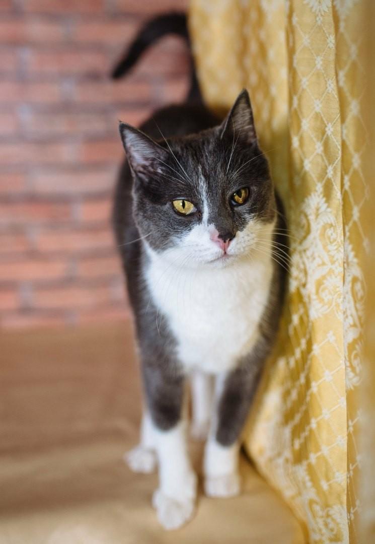 Он хороший, необыкновенный и просто славный кот!