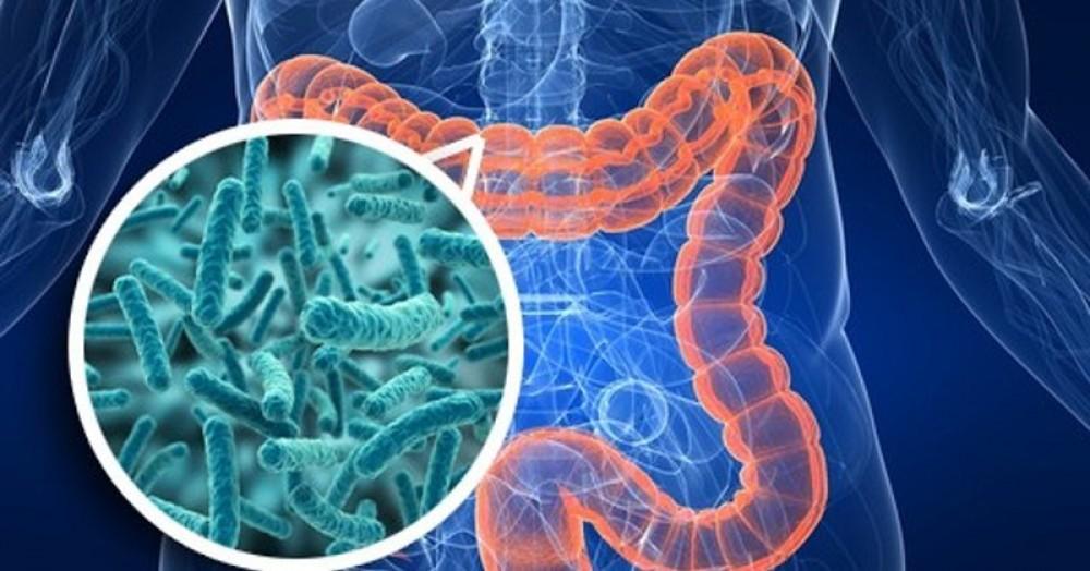 Второй мозг: как кишечные бактерии управляют нашим сознанием