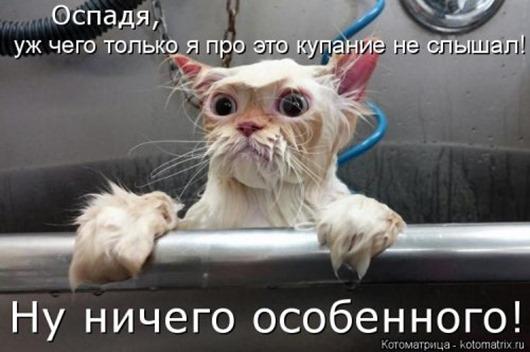 1481911537_kotomatrica-11