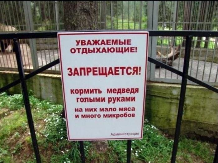 Забота о медведях.