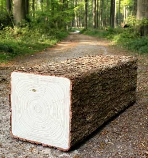 Чудо природы — уникальная долина деревьев с квадратным стволом