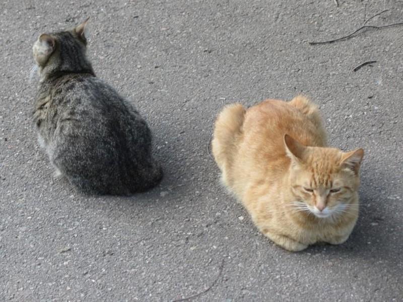 Инь/ян по-бронекотовски бронетехника, животные, коты