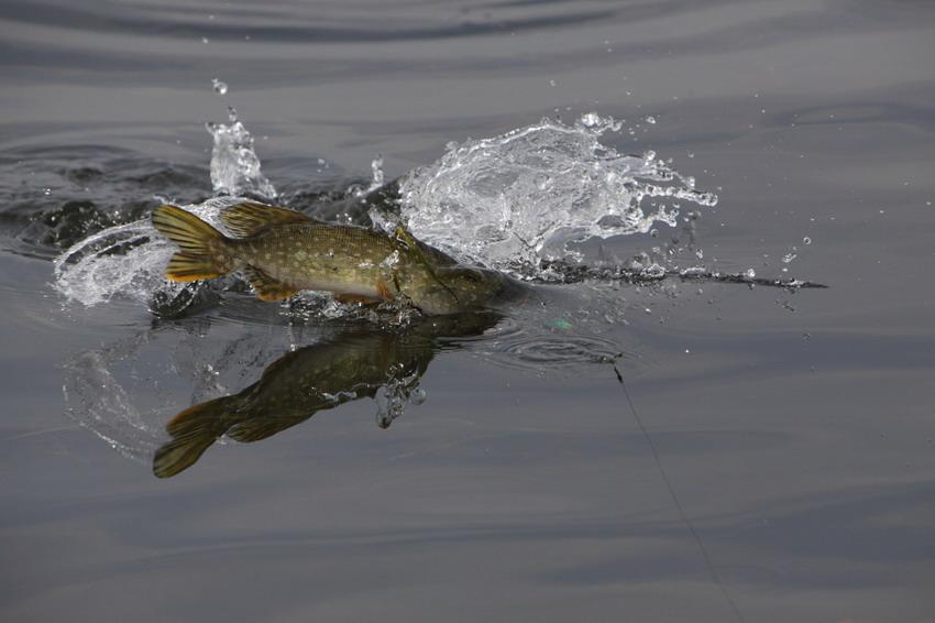 После дождя клёв рыбы заметно усиливается почему