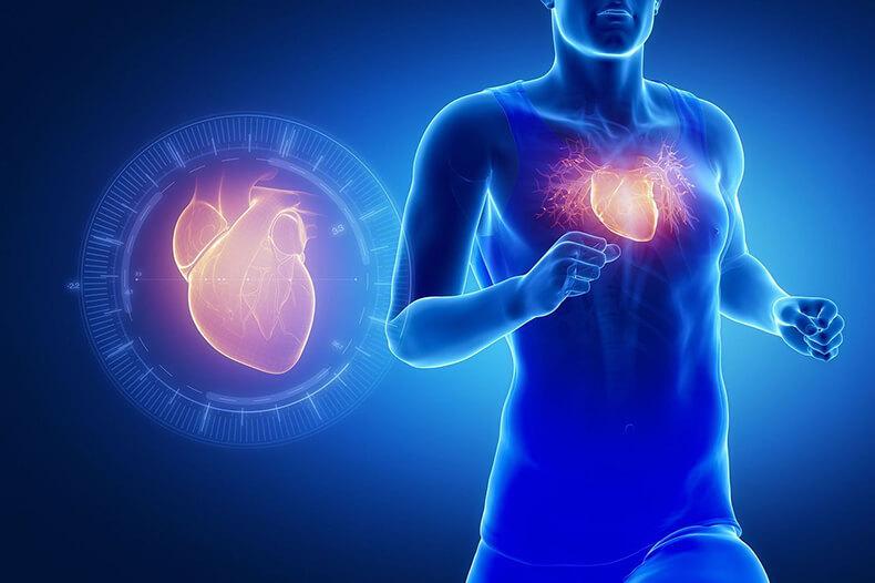 Почему сердцу необходимы селен, CoQ10 и витамин K2