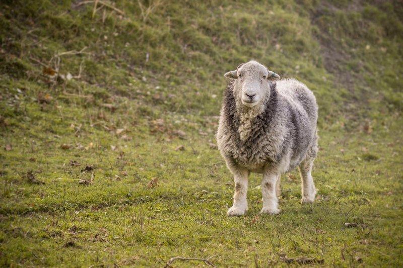 """""""Наши зеленые насаждения бережно охраняются овцами, лошадьми и другим скотом"""" Дувр, в мире, великобритания, город, жизнь, интересное, путешествия, фото"""