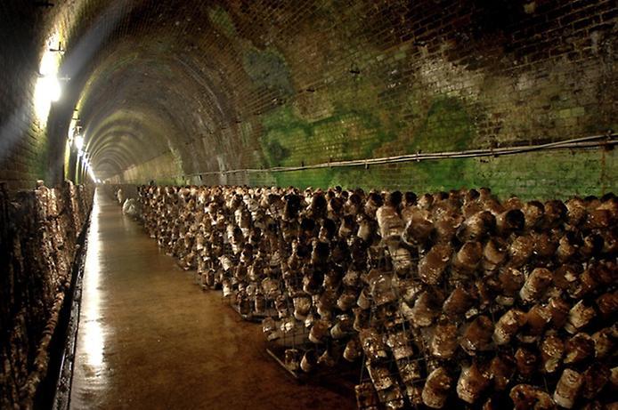 Грибная ферма в старом тоннеле