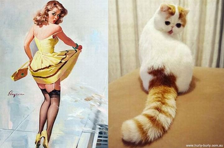 pinupcats04 Кошки и девушки в стиле пинап