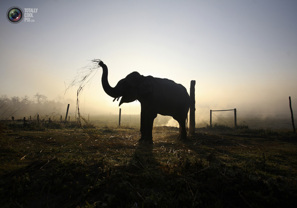 elephants 003 Слоны в национальном парке Читван