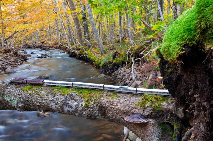 Осенний Лес, Новая Шотландия. Автор: Jeff Friesen.