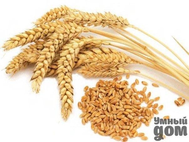 Как принимать пшеничные отруби в лечебных целях?