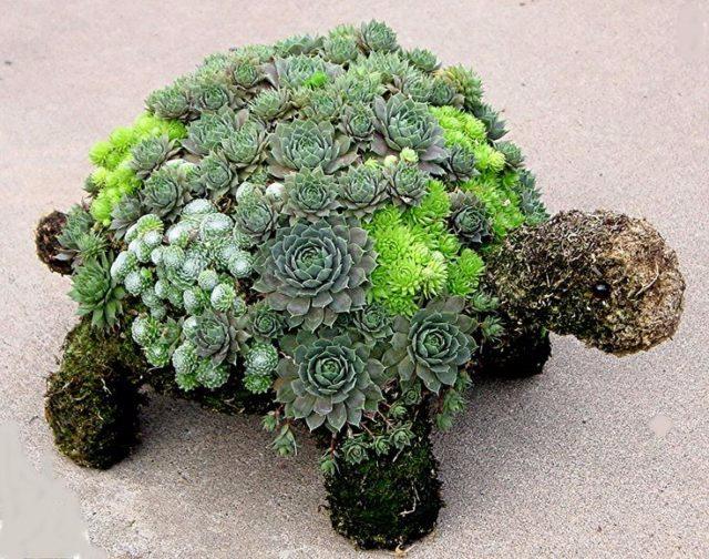 Дивная черепаха из цветов