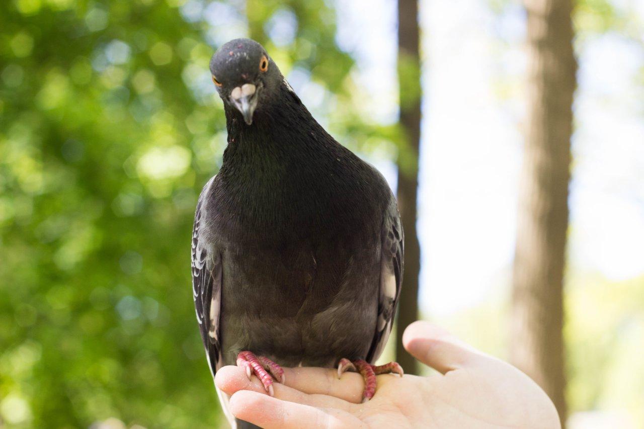 Глобальное потепление сделало из птиц жестоких убийц