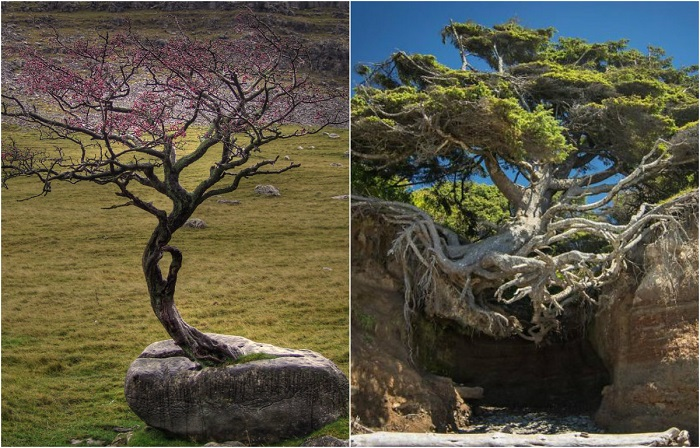 «Жить вопреки всему»: 20 фотографий деревьев, которые выжили, несмотря ни на что
