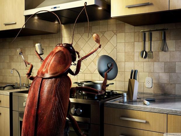 Куда делись тараканы из наших квартир