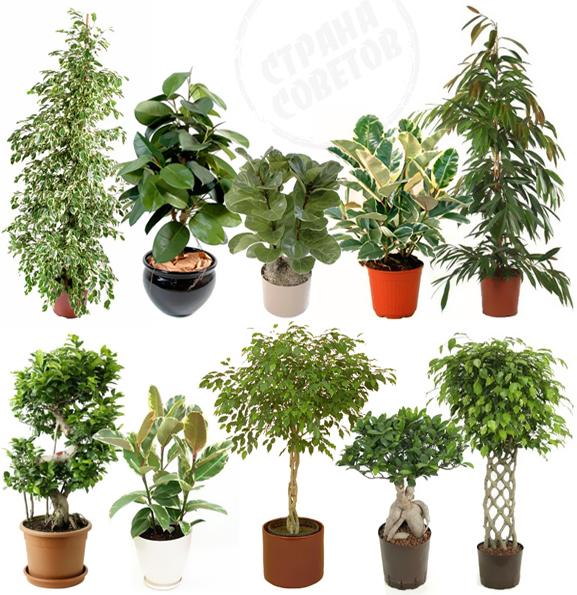 Мода на комнатные растения
