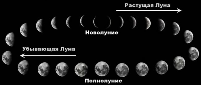 lunar-phases-1-copy-768x324