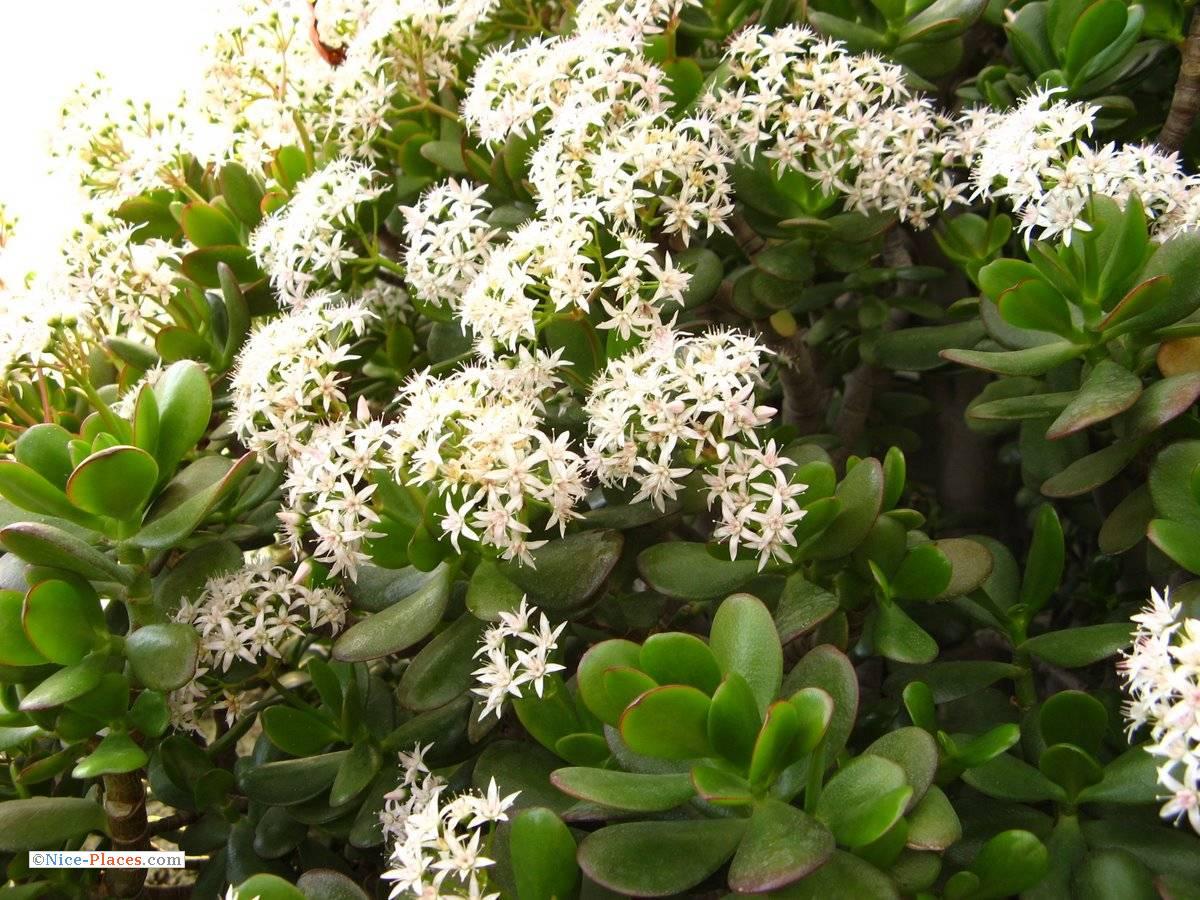 Фото цветка живое дерево