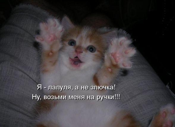 Если вы завели котэ.../если котэ нашел прислугу ;) / Опус не мой, события и схожие персонажи не случайны!