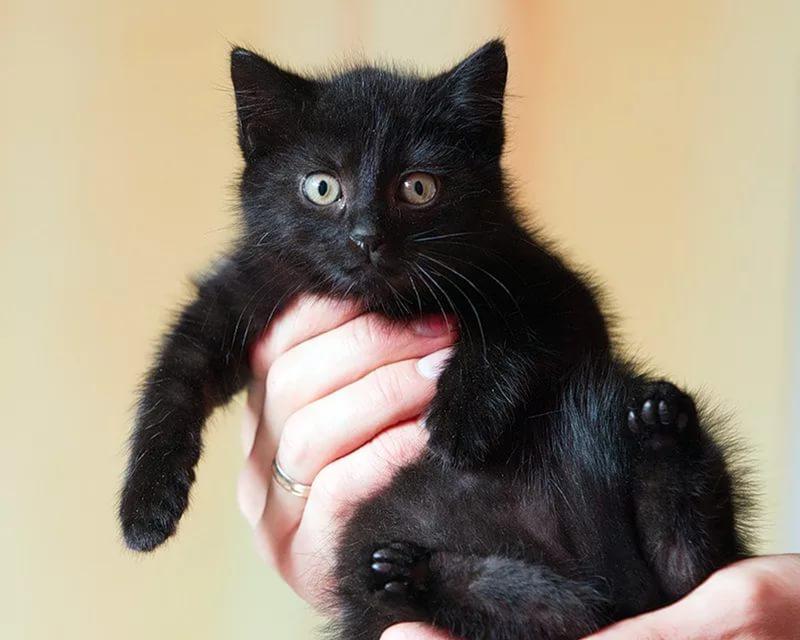 Черные кошки и коты привлекают в дом деньги...