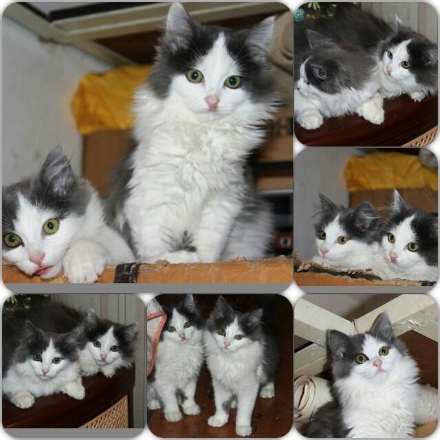 Милые, ласковые очаровательные кошки ищут дом и заботливых хозяев