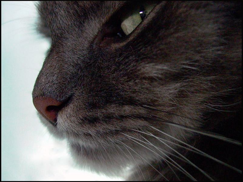 Оборзевший кот: инструкция по выживанию