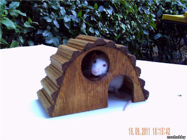 Домик для мыши своими руками 49