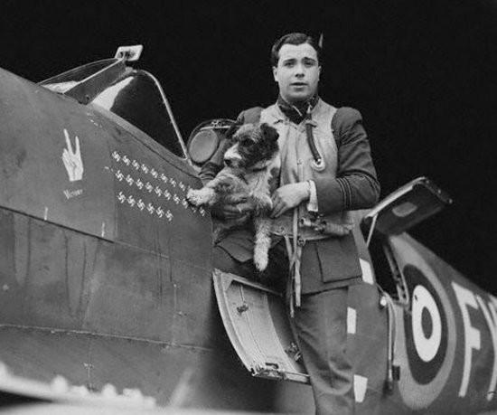 Собаки-парашютисты Второй мировой войны вторая мировая, вторая мировая война, история, собаки