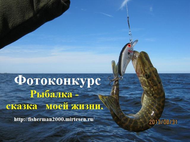 сообщение все рыбалке