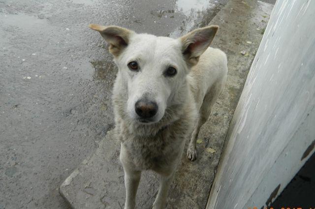 Дом для верного Хатико. В Краснокамске пёс месяц ждал хозяина на вокзале